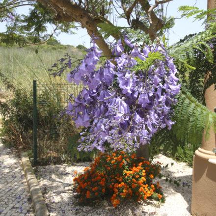 Burgau Apt Algarve Rentals